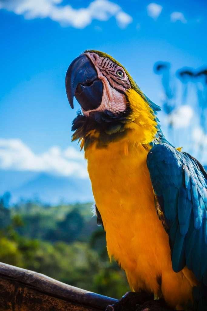 Mas de 100 especies de aves en un solo lugar
